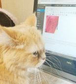 千葉でブログやってます。